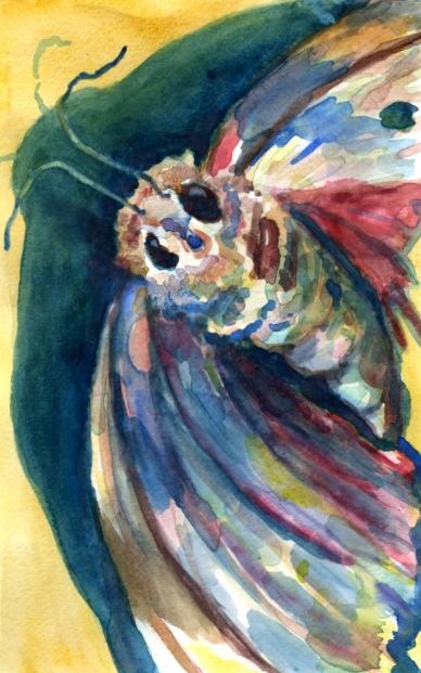 Moth Study iii, Watercolor, 2013